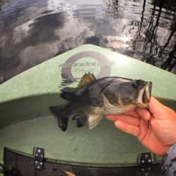 An angler holding a freshly caught bass on the deck of a round boat